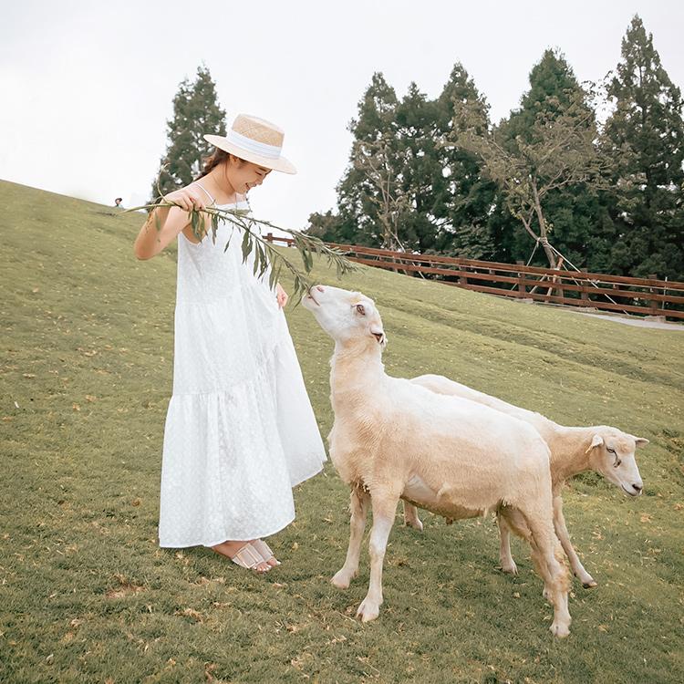 D+AF IRIS企劃 夏日企劃 清境農場04  Iris Chen(@irischen_style)